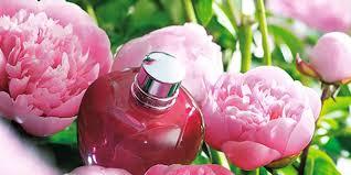 ✿美しい初夏の花『芍薬』✿