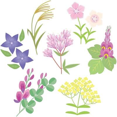 秋の美しさを感じる七草は漢方生薬?